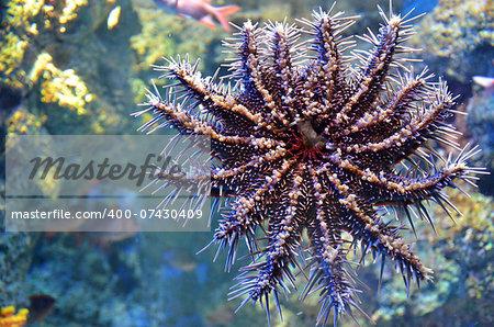 Starfish in the deep sea coral reef