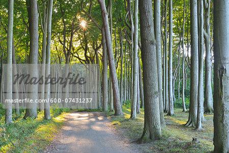 Coastal Beech Forest with Path, Nienhagen, Bad Doberan, Baltic Sea, Western Pomerania, Germany