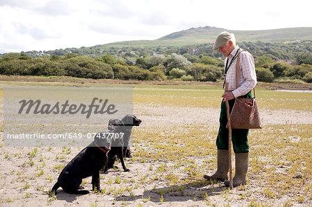Senior man with three black labradors
