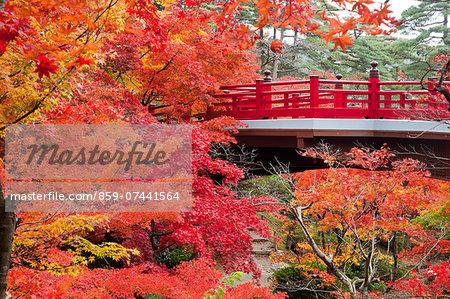 Autumn leaves and bridge