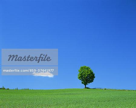 Tree on grassland