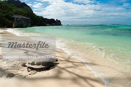 Sea turtle, Anse Source d'Argent beach, La Digue, Seychelles, Indian Ocean, Africa