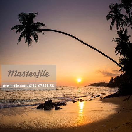 Palm tree at sunset on tropical Mirissa Beach, South Coast of Sri Lanka, Southern Province, Sri Lanka, Asia