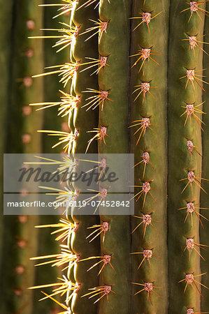 Detail of cactus in the garden of the Villa Majorelle, Marrakech, Morocco, North Africa, Africa