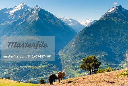 Grivola and Grand Nomenon mountains, Aosta Valley, Italian Alps, Italy, Europe