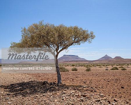 The shade of a tree, Damaraland, Namibia, Africa