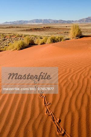 Tracks in the sand dunes, NamibRand Nature Reserve, Namib Desert, Namibia, Africa