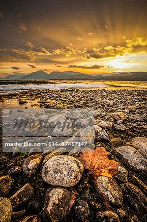 Maple leaf and rocky shoreline Okanagan Lake, Naramata, British Columbia, Canada