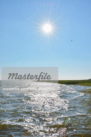 Shoreline with Reeds and Sun, Born auf dem Darss, Barther Bodden, Fischland-Darss-Zingst, Mecklenburg-Vorpommern, Germany