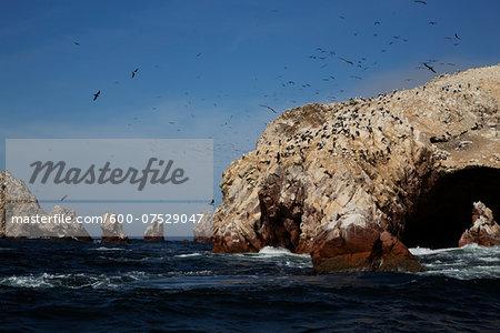 Birds at Wildlife Sactuary on Ballestas Islands, Paracas, Pisco Province, Peru