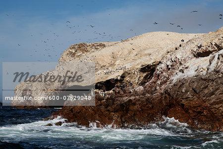 Penguins at Wildlife Sactuary on Ballestas Islands, Paracas, Pisco Province, Peru