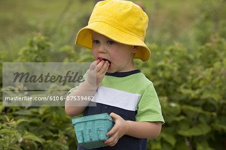 Male toddler eating red raspberries