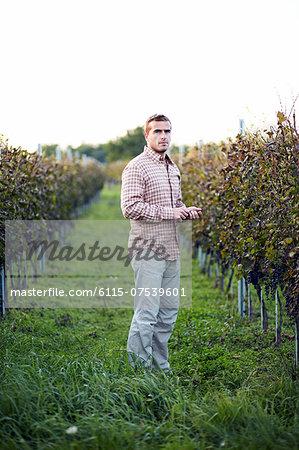 Young Man In Vineyard, Croatia, Europe