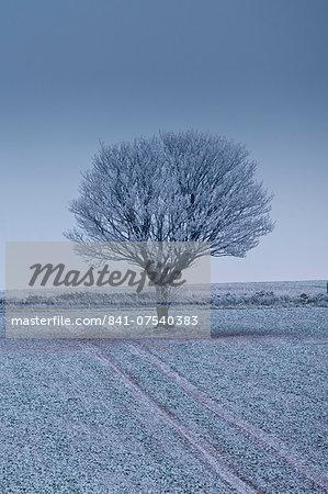 Hoar frost on tree and field in frosty wintry landscape in The Cotswolds, Oxfordshire, UK
