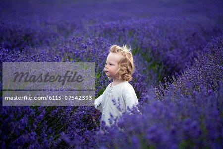 Boy walking in field of lavender