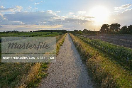 Dike Path with Sun, Summer, Baltic Island of Fehmarn, Schleswig-Holstein, Germany