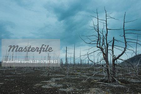 Dead tree forest on the Tolbachik volcano, Kamchatka, Russia, Eurasia