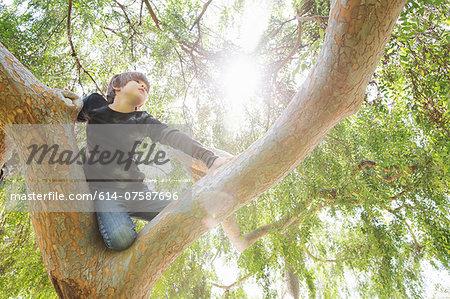 Boy hiding in sunlit tree gazing into distance