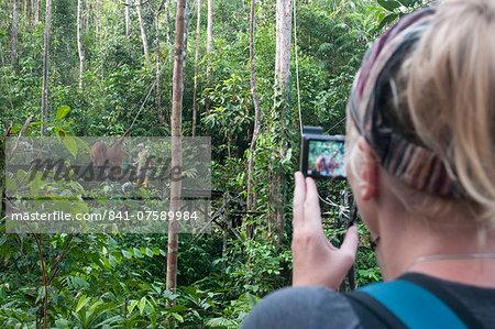 Tourist watching rehabilitated orangutans arriving  at Semenggoh Orangutan Rehabilitaion Centre, near Kuching in Sarawak, Borneo, Malaysia, Southeast Asia, Asia