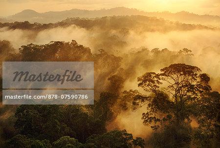 Misty rainforest at sunrise, Danum Valley, Sabah, Borneo