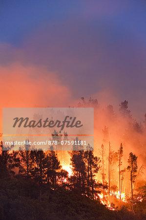Wildfire, Santa Cruz Mountains, Monterey Bay, California