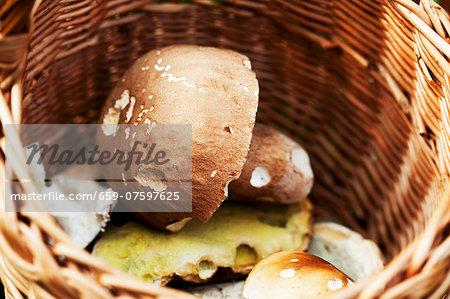 Fresh wild mushrooms in a basket (close-up)