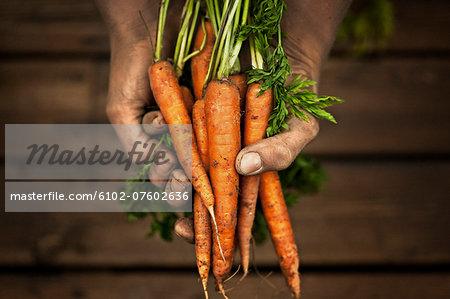 Hands holding carrot, studio shot