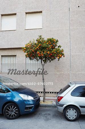 Orange tree in city, Seville, Spain