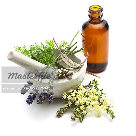 Medicinal plants, conceptual image.
