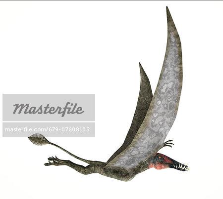 Artwork of a dorygnathus dinosaur flying against a white background.