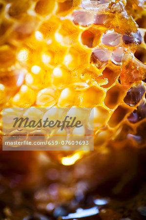 Close-up of honeycomb
