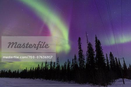 Northern Lights (Aurora Borealis) illumintaing Night Sky above Fir Forest, Pyha-Luosto National Park, Lapland, Finland