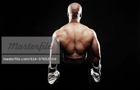 Boxer, rear view