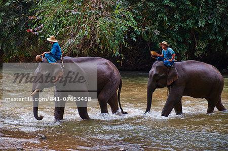 Elephant training, Chiang Dao, Chiang Mai, Thailand, Southeast Asia, Asia