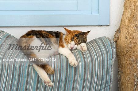 Sleeping cat, Mykonos-Town, Mykonos, Cyclades, Greece