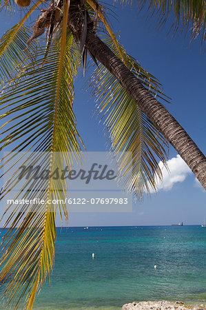 Palm trees and Caribbean Sea, Grand Cayman, Cayman Islands