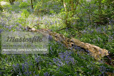 Log in field of flowers