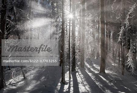 Sun shining in snowy forest