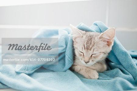 Tabby kitten sleeping under blanket