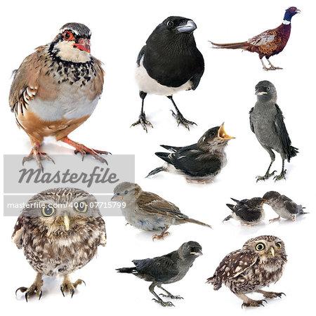 group of european wild birds in studio