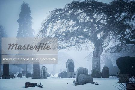 Graveyard in winter fog