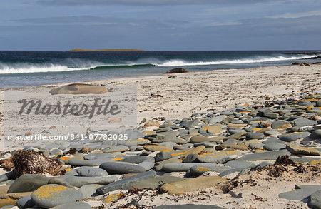 Southern elephant seals (Mirounga leonina) on beach with breaking wave, Sea Lion Island, Falkland Islands, South America