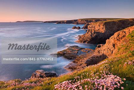 Flowering pink thrift on the Cornish cliffs looking towards Trevose Head, Cornwall, England, United Kingdom, Europe