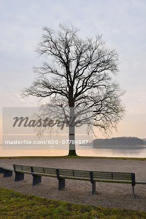 Park benches and tree at Lake Schwerin, Schwerin, Western Pomerania, Mecklenburg-Vorpommern, Germany