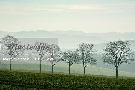 Row of trees in landscape, Echte, Kalefeld, Harz, Lower Saxony, Germany