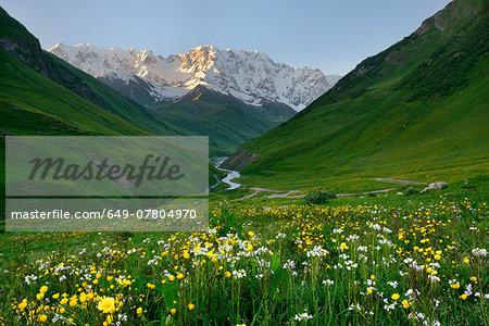 View of wildflower meadow and Shkhara mountain, Ushguli village, Svaneti, Georgia
