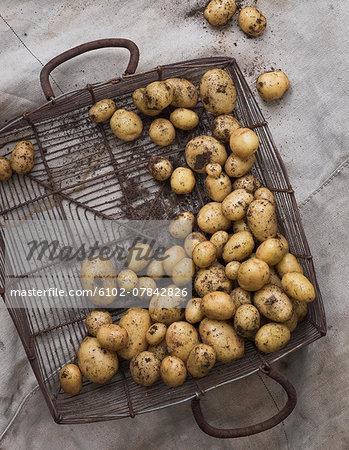 New potatoes in basket