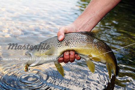 Hand holding fish, close-up