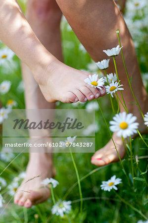 Ox-eye daisies and human feet, close-up
