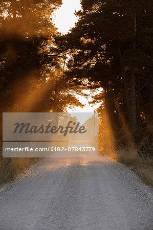 Evening light lightning forest road